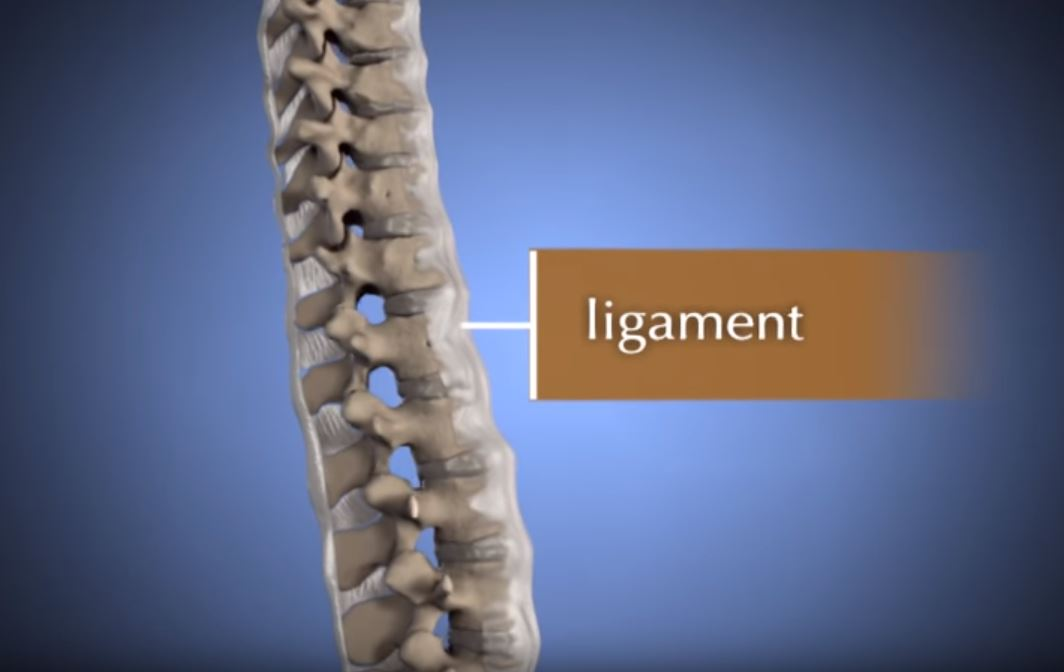 Spine Anatomy Animation Orthoinfo Aaos