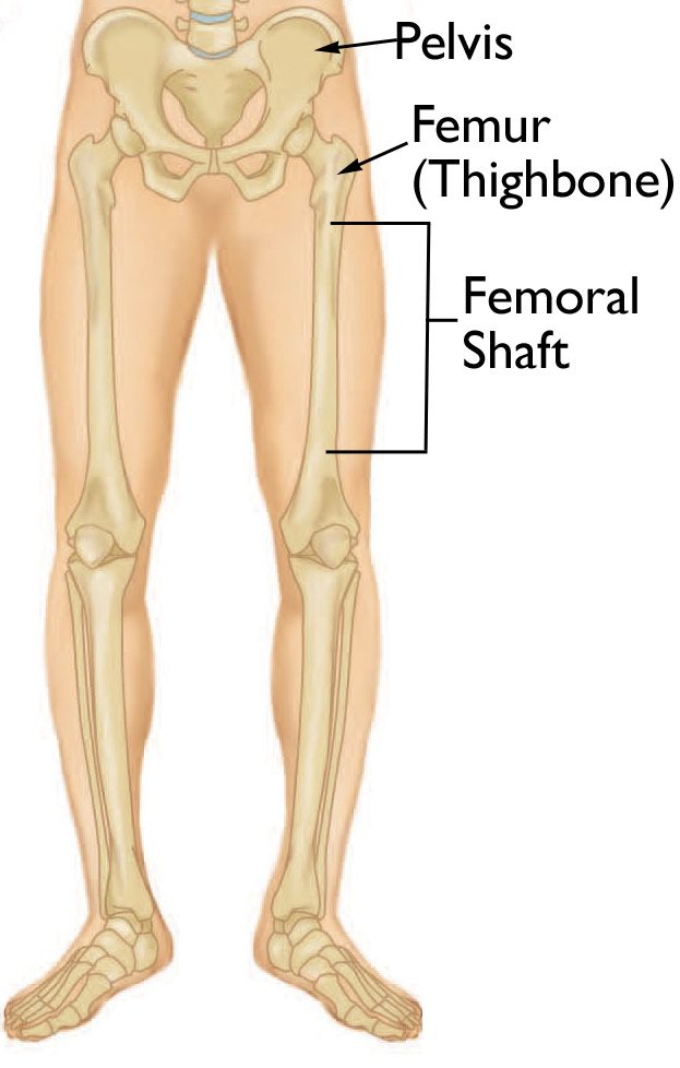 Normal anatomy of the leg