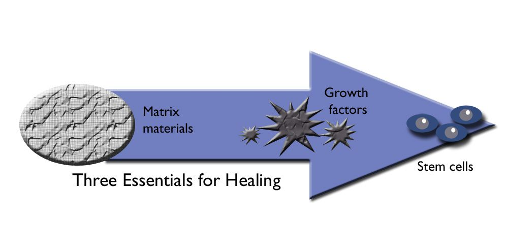 Three factors necessary for healing