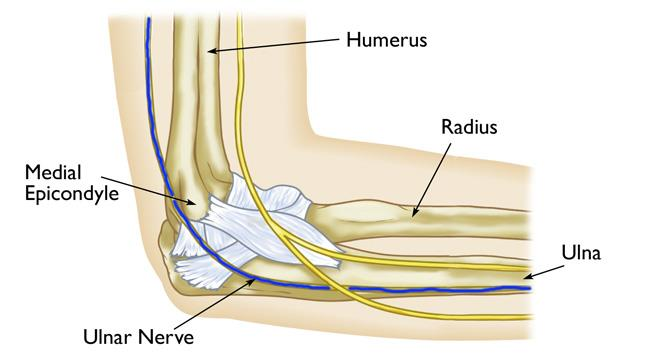 Path of ulnar nerve through elbow