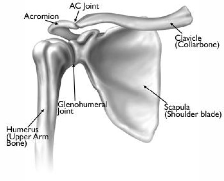Illustration of normal shoulder anatomy