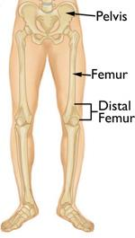 Normal leg anatomy